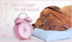 fall-back-dog-pink-550x320
